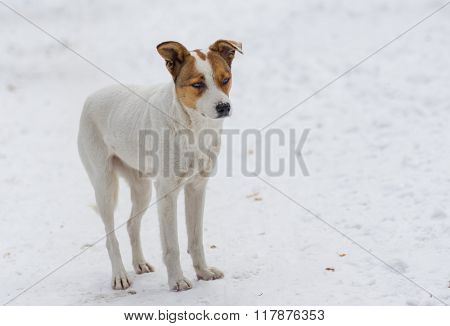 Outdoor portrait of cute stray dog