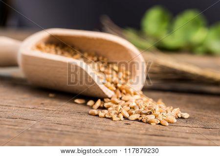 Wheat Of Timilia Grains
