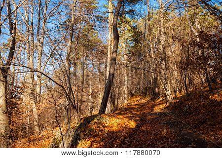 Jura krakowsko-czestochowska autumn view
