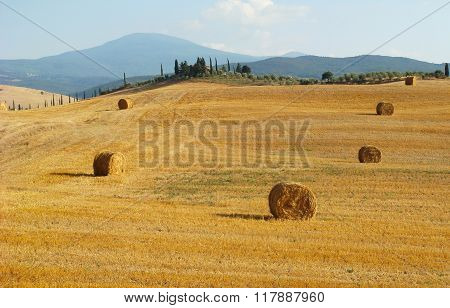 Tuscany landscape with typical farm house on a hill in the Val d'orcia with cypress trees
