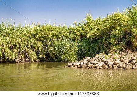 Bushes Along The Banks, Jordan River