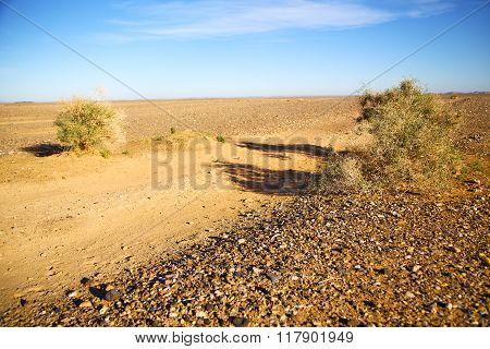 Bush  In The  Desert  Sahara Africa