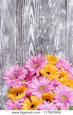 Fresh Gerbera Flowers On Wooden Background
