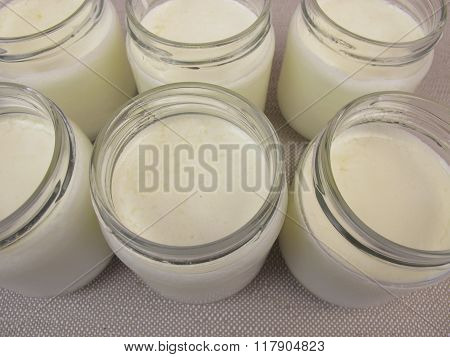 Yogurt in jars from yogurt maker