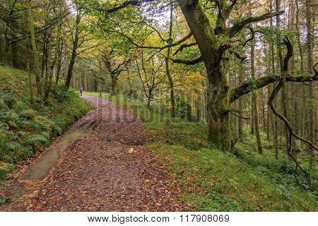 A Autumn forest path in wales UK.