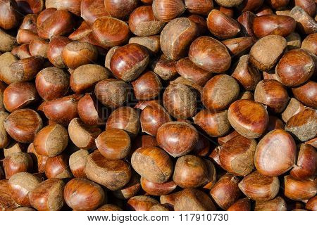 Chestnut - Stock image