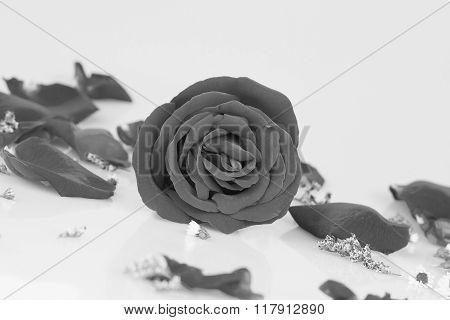 Dye  Rose With  Rose Petals