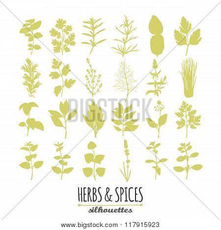 Collection of hand drawn spicy herbs silhouettes. Culinary elements for your design