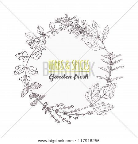 Round frame with hand drawn herbs and spices. Outline style background