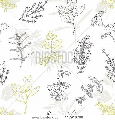 Seamless pattern with hand drawn spicy herbs. Culinary kitchen background