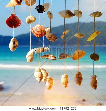 Sea Shells Shore Malaysia Beach Concept