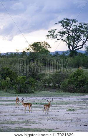 Tanzania National Parks
