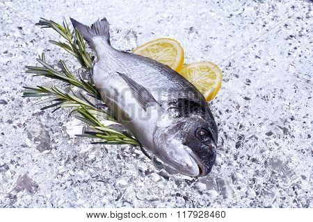 fresh dorado seafood on ice