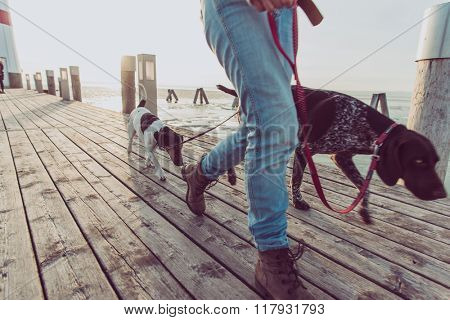 Close up image of woman legs during dog walk. Young female followed by two dogs.