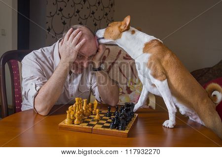 Smart basenji dog desperately trying to calm down its opponent