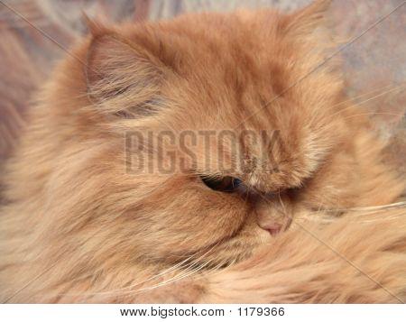 Cat Antonio