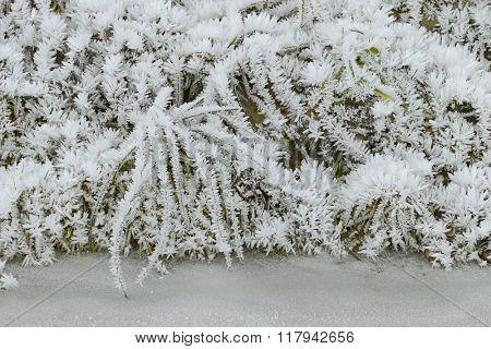 Hoarfrost rime ice on twigs of grass along frozen stream, beautiful winter scene