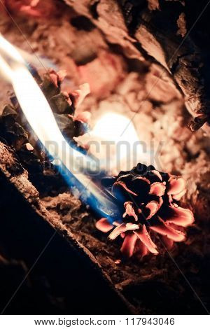 pine cone close-up in the fire