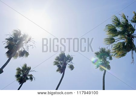 Sunlight and palm trees