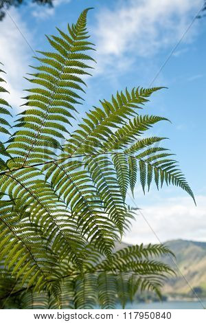 Fern tree leaves against blue sky at Queen Charlotte Track in Marlborough Sounds South Island New Zealand