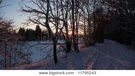 sunset winter woodland scene