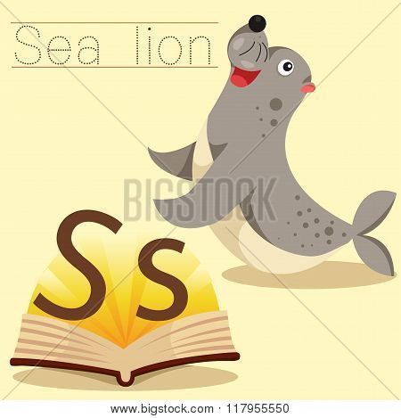 Illustrator of s for sea lion vocabulary