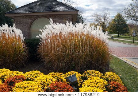Chinese Silver Grass in a Garden