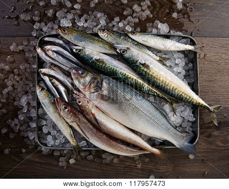 Fresh fishes mix hake seabass sardine mackerel anchovies on ice and wood