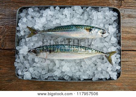 mackerel fresh fish on ice in a wooden background