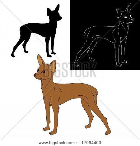 set small terrier dog isolated