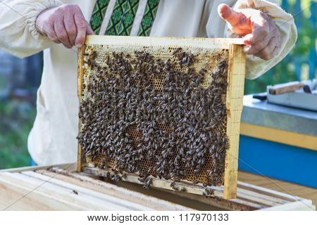 Beekeeper Keeps Honeycomb With Bees
