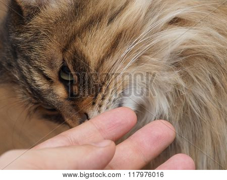 Man's hand stroking pretty contented cat. concept