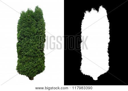 Decorative evergreen tree