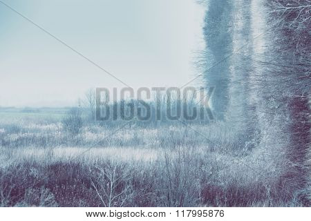 blue misty winter landscape with grass and bushes, bend photo manipulation