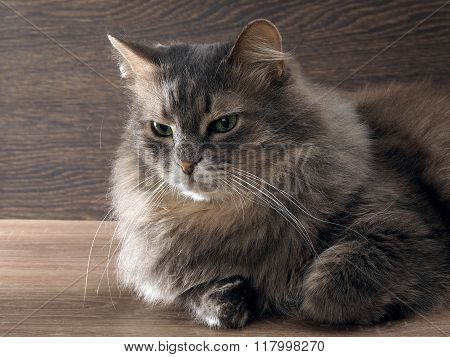 Fluffy, fluffy, big gray cat with bright green eyes