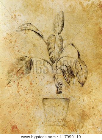 Hand drawn ropical plants. Plants Dieffenbachia sketch. Sepia color.