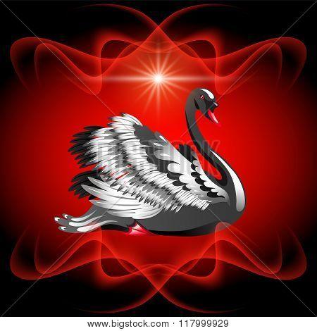 Elegant Black Swan