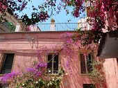 foto of crotons  - Pink building in Crotone italy covered in flowers - JPG