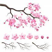 Japan sakura cherry branch with blooming flowers poster