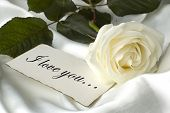foto of single white rose  - i love you note in front of white rose - JPG
