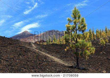 Tenerife hiking path on volcano teide. Arenas Negras landscape.