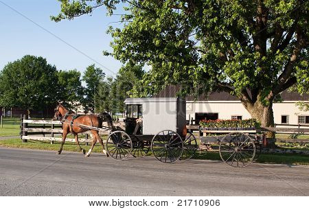 Amish Carriage with Flower Cart