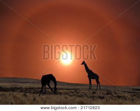 Giraffes In Silhouette Against Hazy Sun Sky