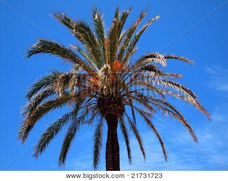 Palm Tree Against A Blue Sky