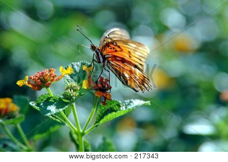 Lantana Plant And Butterfly