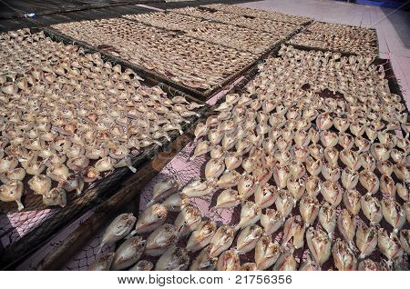 salty fishes drying under the sun in the fishing village