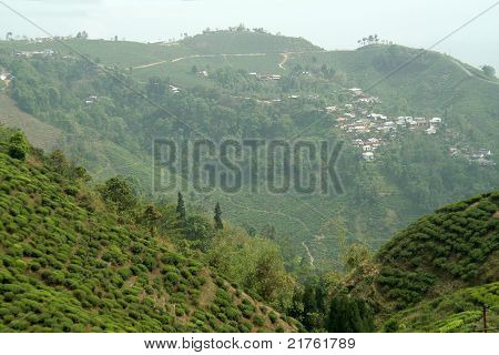 Mountain Town And Tea Garden