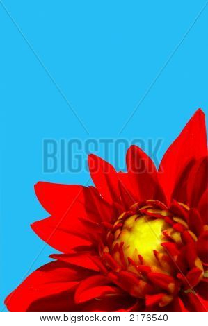 Red Flower With Blue Sky On The Background