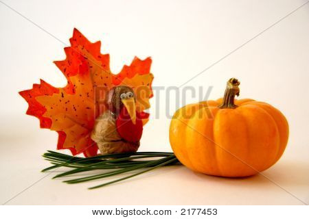 Tiny Turkey Meets Mini Pumpkin