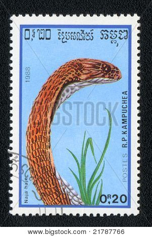 Egyptian Asp Or Cobra